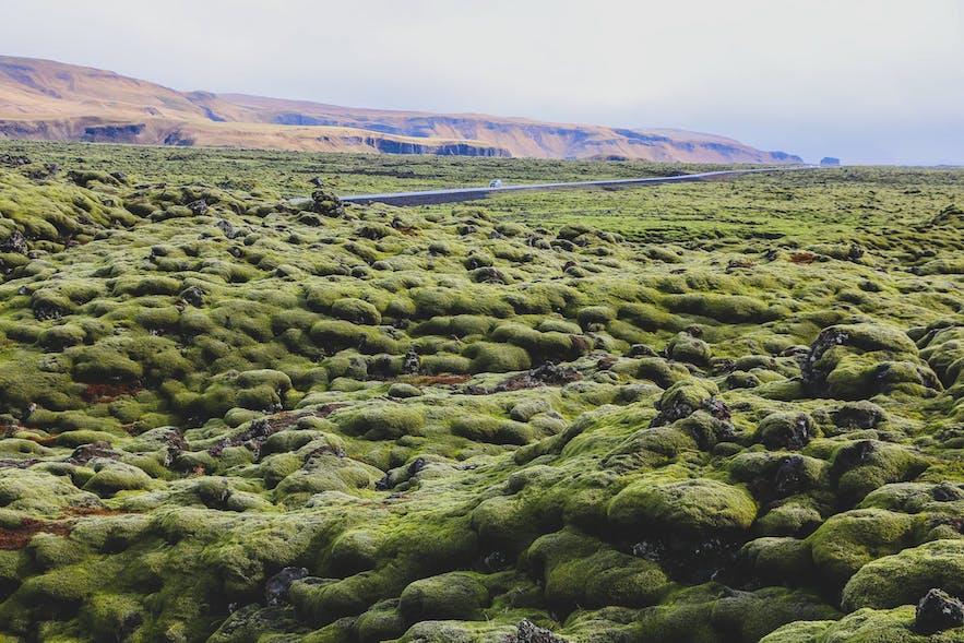 Green Moss Ring Road Self-drive