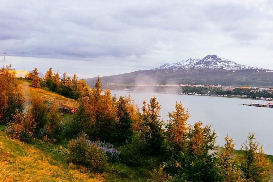 Kjarnaskógur森林是冰岛北部为数不多的森林之一