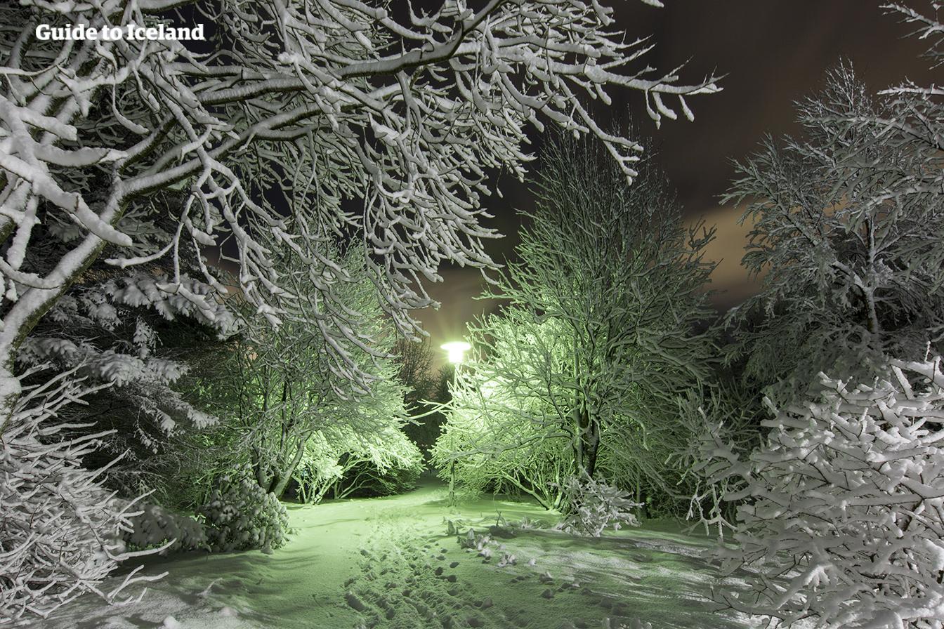 꽁꽁 얼어붙은 트요르닌 호수를 지나며 레이캬비크의 겨울 풍경을 감상해 보아요.