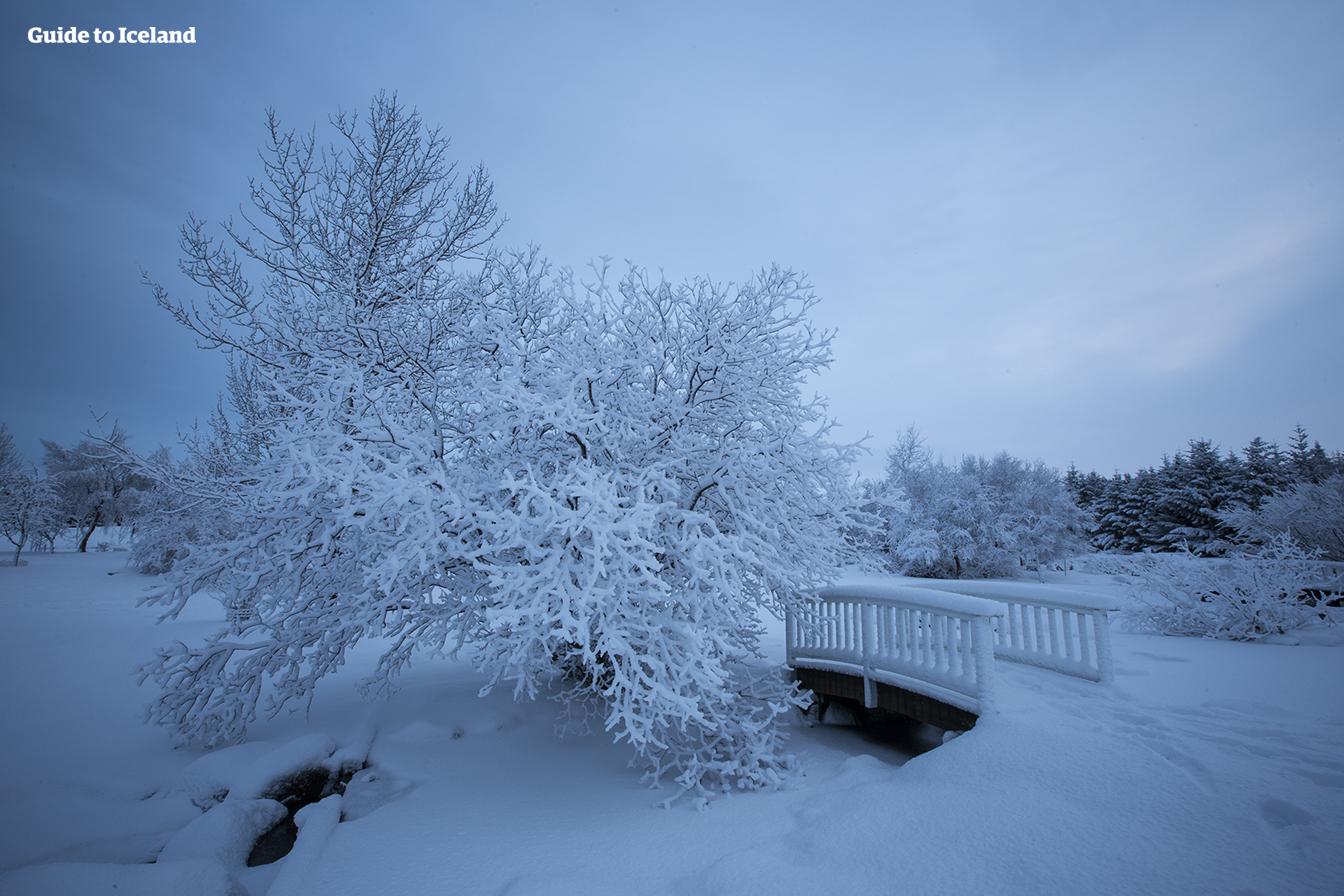한 겨울, 아름다운 레이캬비크 도심.