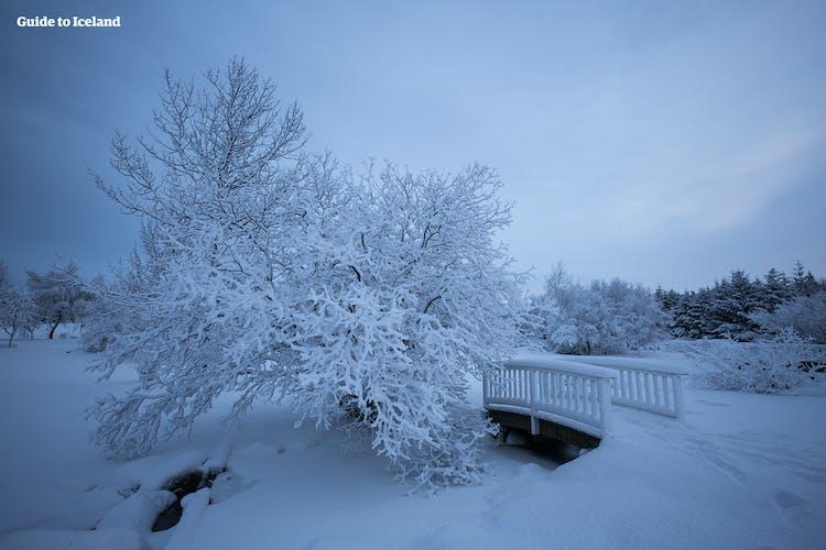 La hermosa ciudad de Reikiavik en invierno