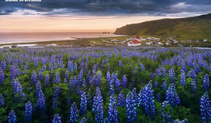 8-dages sommerpakke | Islands bedste attraktioner