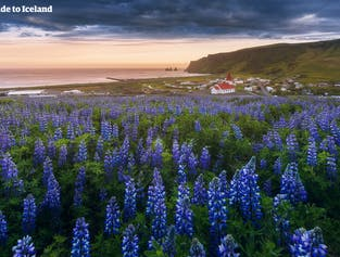 8 Day Summer Tour Package | Best Attractions in Iceland width=