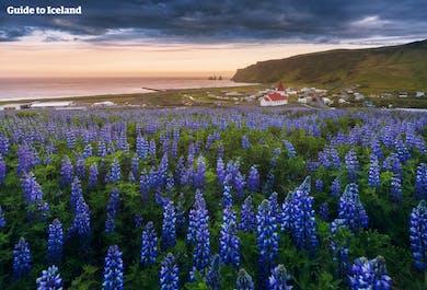 Paquete de Verano de 8 Días   Las mejores atracciones de Islandia
