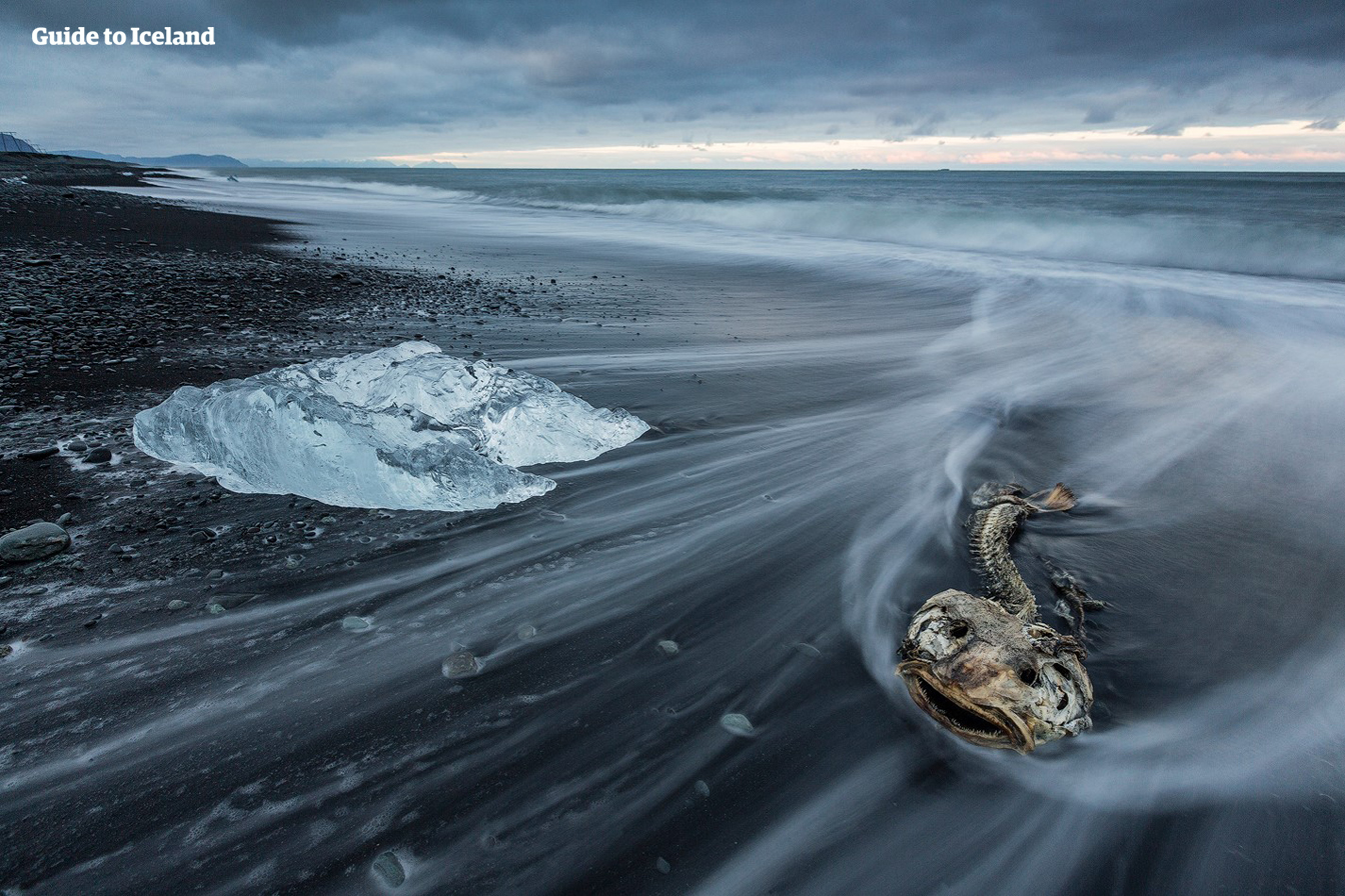 ヨークルスアゥルロゥン氷河湖からそう遠くない場所にあるのはダイヤモンドビーチ。ここでは氷のかけらに飾られた真っ黒な砂浜が見渡せる
