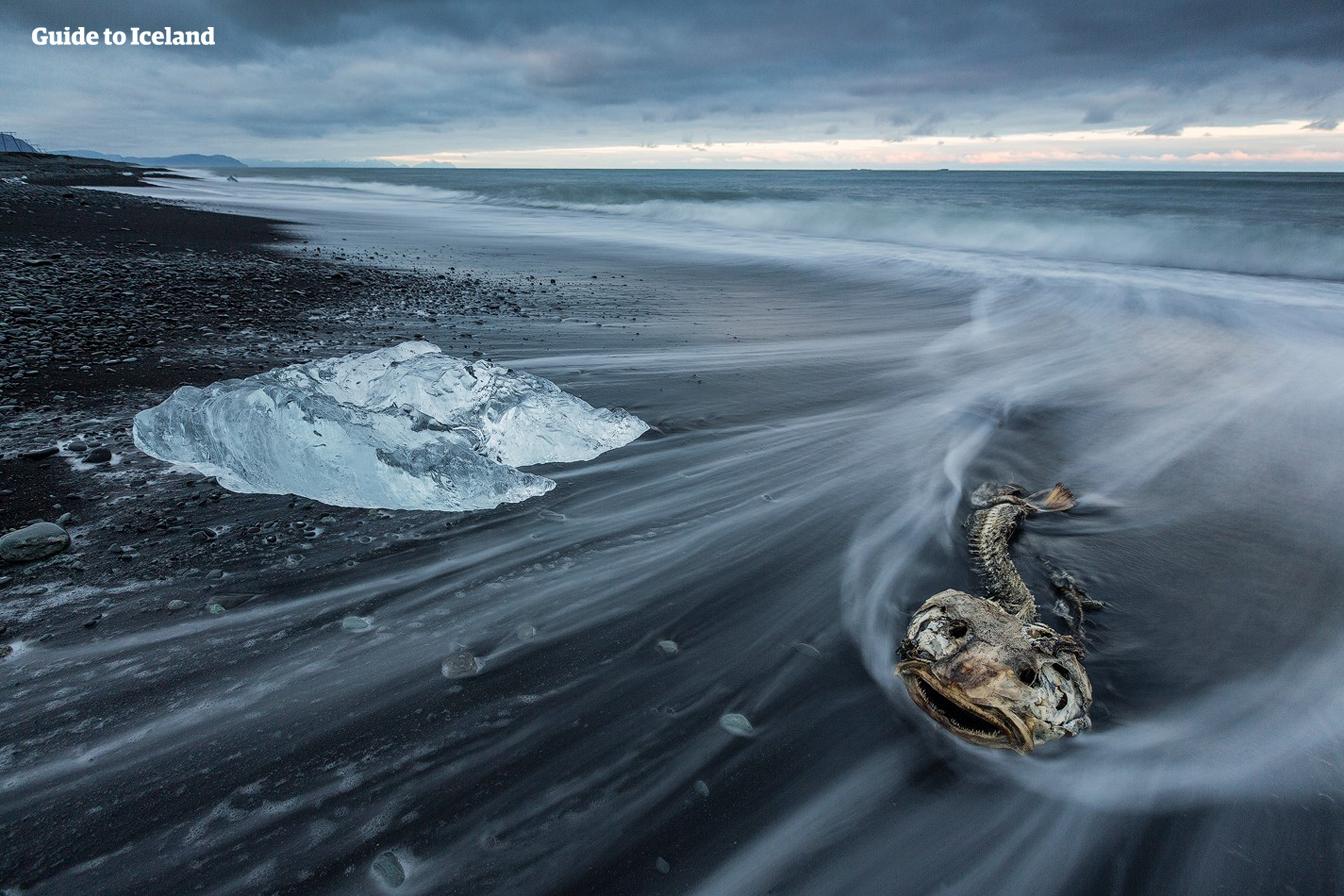 古老的冰块停在冰岛杰古沙龙冰河湖(Jökulsárlón)旁边的钻石黑沙滩上