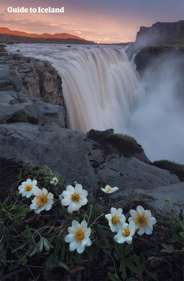 冰岛北部的黛提瀑布是欧洲最汹涌磅礴的瀑布