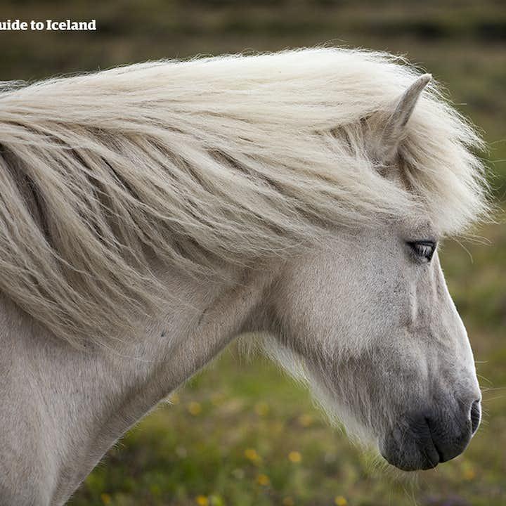 温泉山谷(Reykjadalur)温泉骑马一日游
