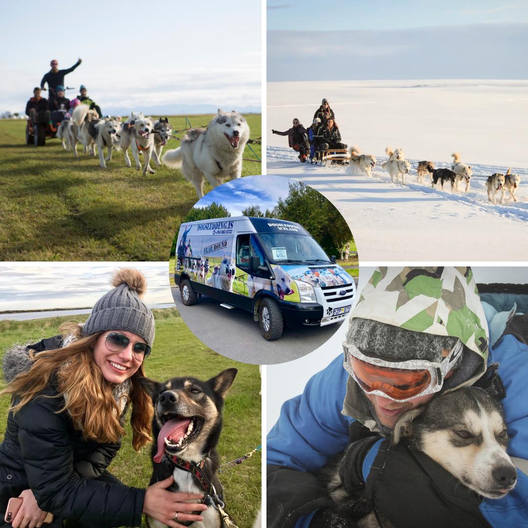 Hundeslædetur med transfer fra Reykjavík