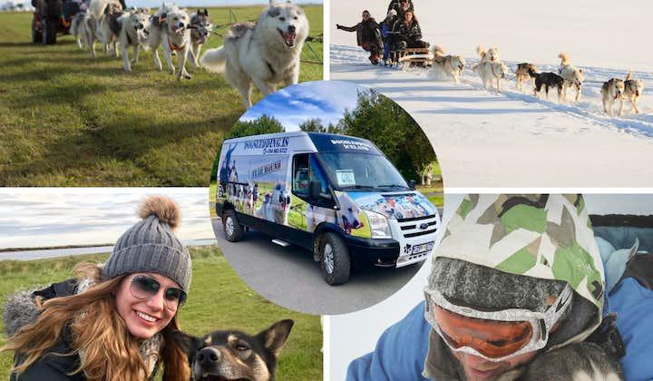 Tur med hundsläde inklusive transfer från Reykjavik