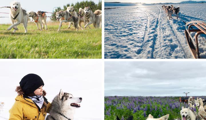 Excursión en trineo de perros cerca de Reikiavik   Salida desde el lugar de encuentro