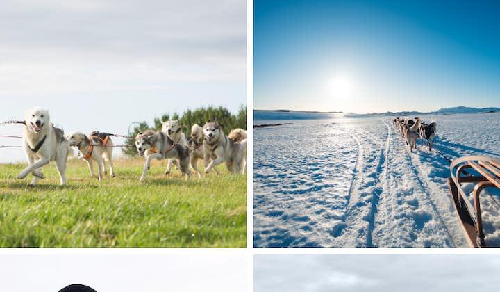 Hundeschlitten-Tour   Treffpunkt vor Ort (nahe Reykjavik)