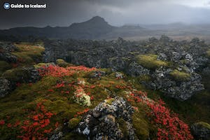 Iceland_Unknown_Lava field_Autumn_Moss_Mountain.jpg