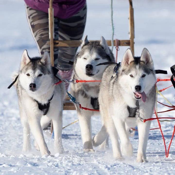 Huskies pulling a sled