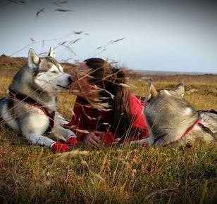 Meet the Husky - Petting & Photo Near Akureyri