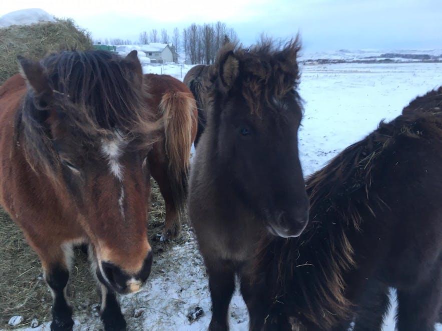 Выходные по-исландски