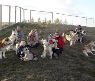Husky Petting & Photo Near Akureyri