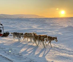 ハスキー犬と犬ぞり|アークレイリからの送迎付き