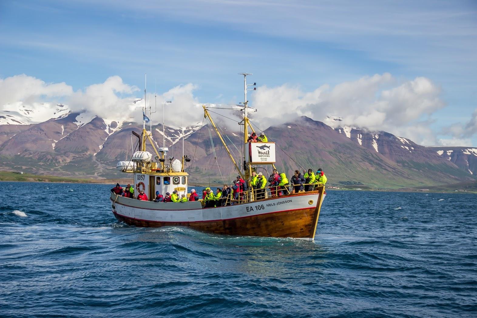 ภาคเหนือของประเทศไอซ์แลนด์นั้นเป็นสถานที่ที่เด็ดในการชมวาฬ และมีโอกาสเห็นได้สูงที่สุด.
