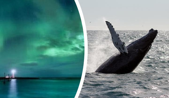 Combination 6 Hour Whale Watching Boat Tour & Northern Lights Hunt with Transfer from Reykjavik