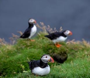 Puffin Hiking Tour of Ingolfshofdi on Iceland's South Coast
