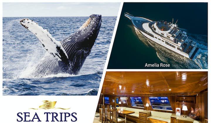 奢华观鲸体验-冰岛游艇观鲸旅行团 雷克雅未克出发