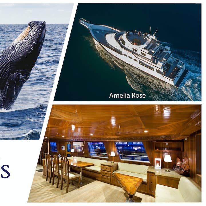 Walbeobachtung auf einer luxuriösen Jacht