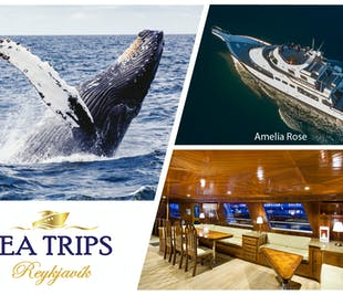 Luxury Whale Watching Tour From Reykjavik