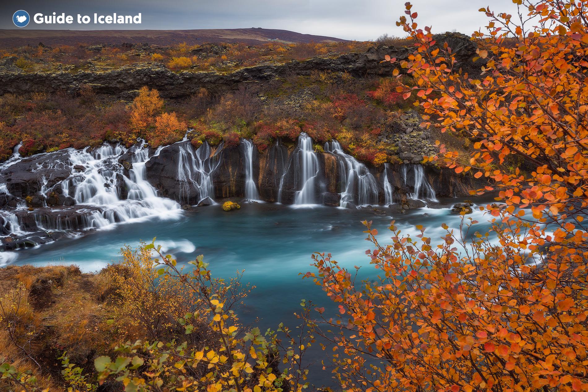Hraunfossar ist von Vegetation umgeben, die die jeweilige Jahreszeit sehr auffällig widerspiegelt, wie man an dieser Herbstaufnahme sieht.