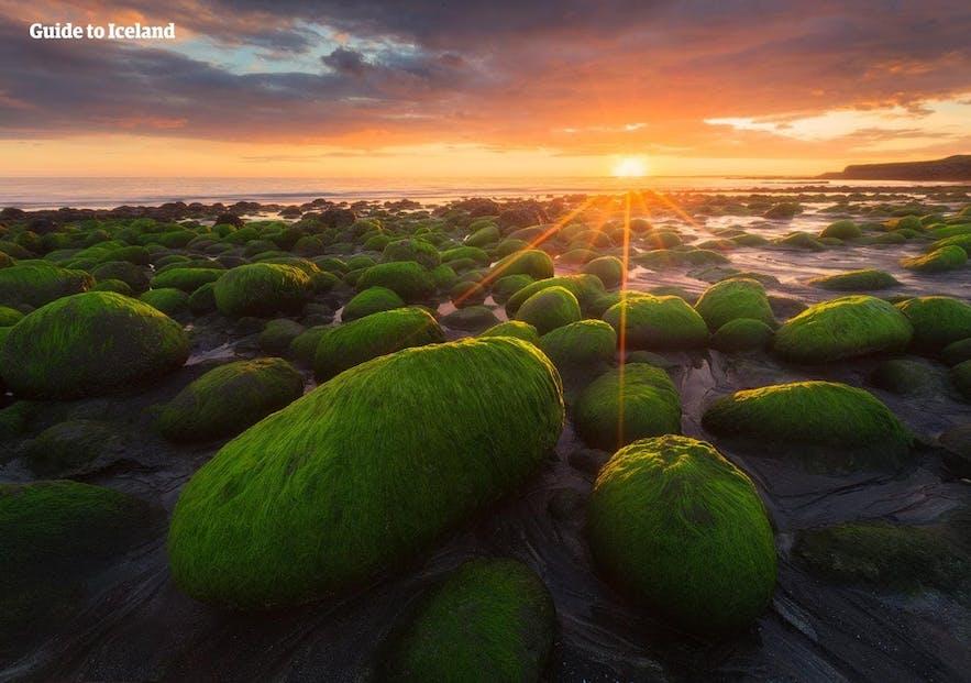 Algenbedeckte Felsen an den Ufern von Westisland