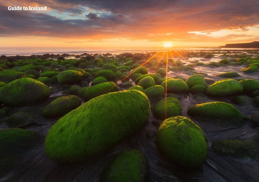 Algae covered rocks on the shores of West Iceland