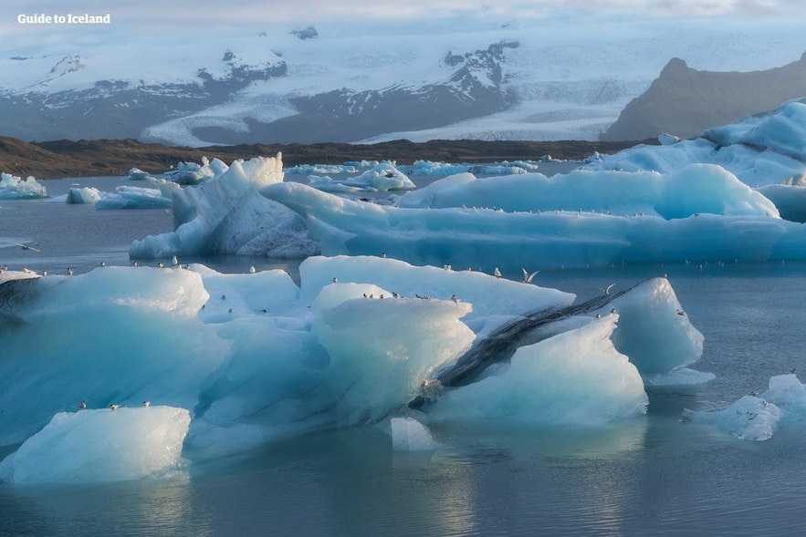 Birds perching on the ice floating in Jokulsarlon glacier lagoon
