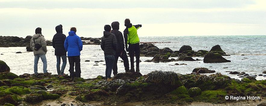 Seal-spotting at Ytri-Tunga