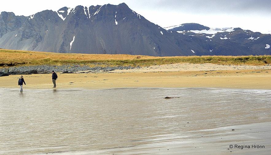 Seal-spotting at Ytri-Tunga Snæfellsnes