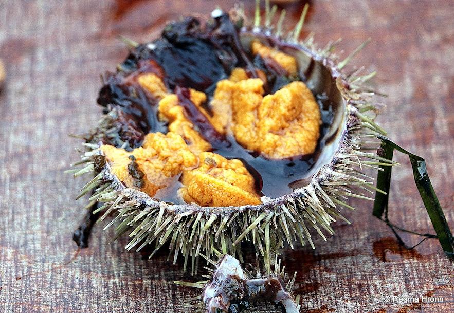 The fruit of the ocean from Breiðafjarðareyjar islands