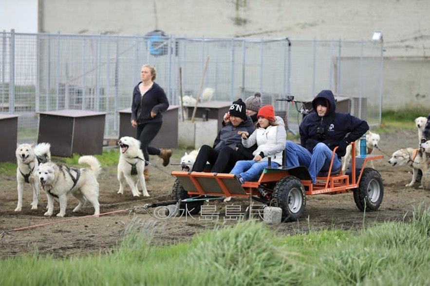 冰島夏季狗拉車