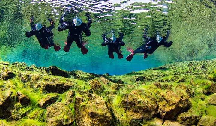 A group of people Snorkelling in Silfra