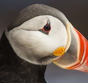 Hrimland Luxury Apartment #2