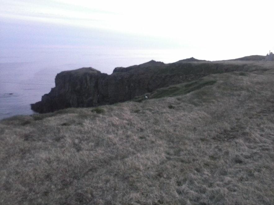 Cliffs of Grímsey where puffins nest