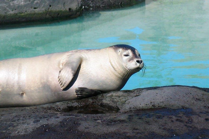 冰岛动物园