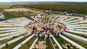 Þverárrétt _ roundup _ Borgarfjörður _ west _ Summer _ not WM _ _ 2018 _ September.jpg