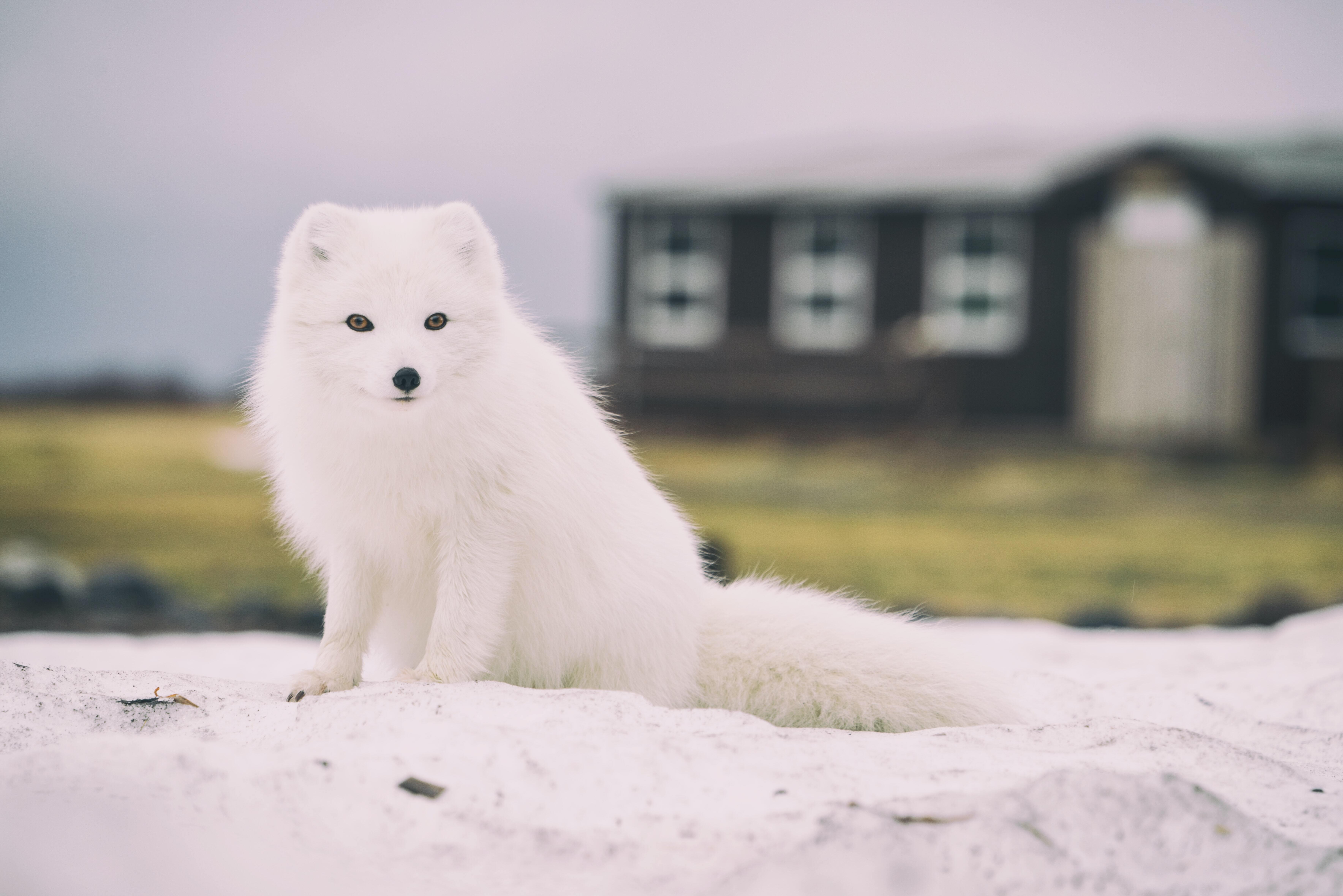 Sommerhuse på Island