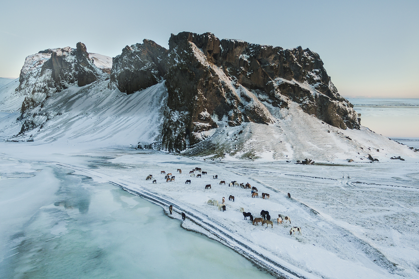 Horses resting by Eyjafjöll mountain in Iceland
