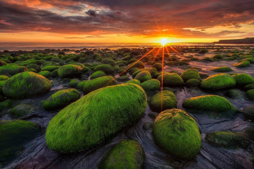 """The morning is known as """"Golden Hour"""" to aspiring photographers thanks to its advantageous lighting conditions."""