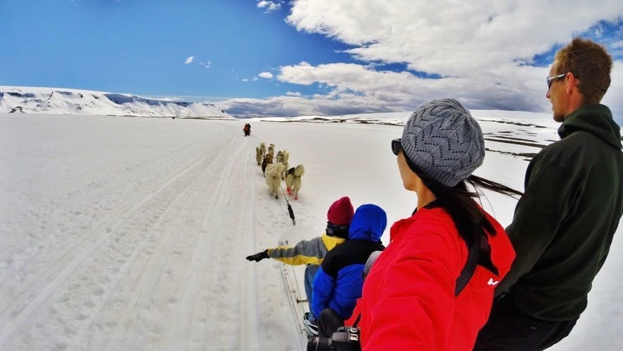 So when are you coming on your dog sled adventure in Iceland?