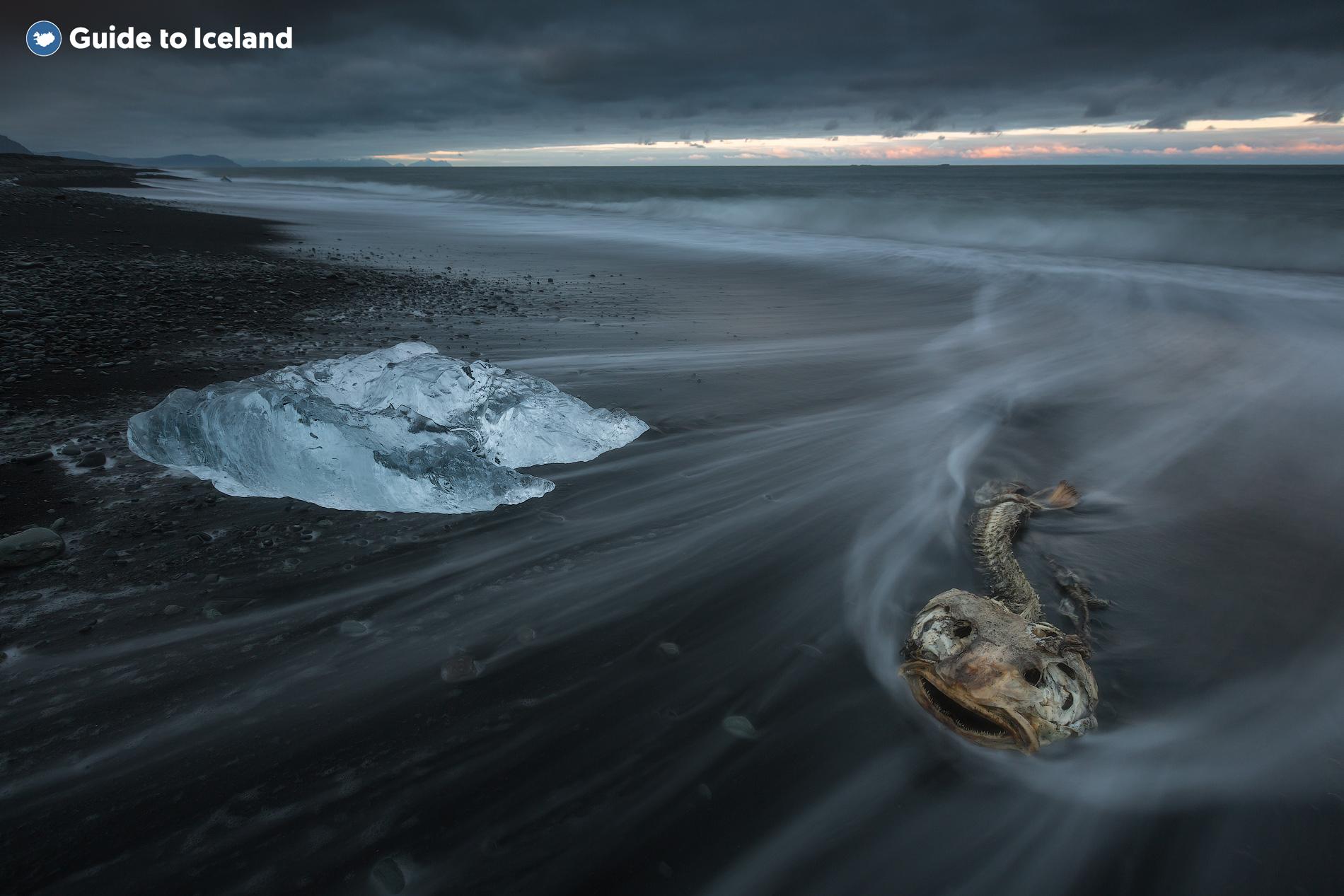 Pieces of ice resting on the Diamond Beach near Jökulsárlón Glacier Lagoon in the Southeast of Iceland.