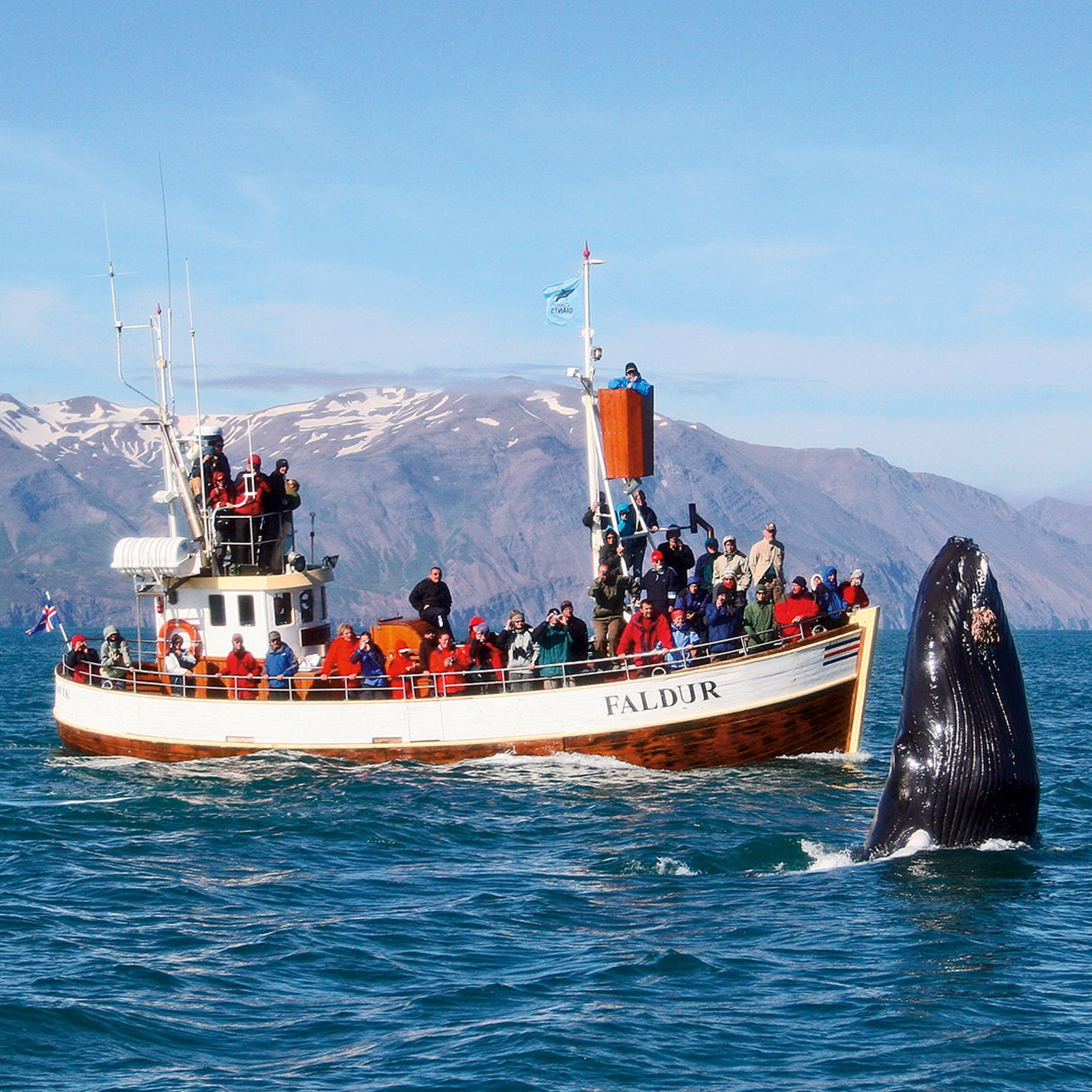 A boat of travellers whale watching off the coast of Iceland.
