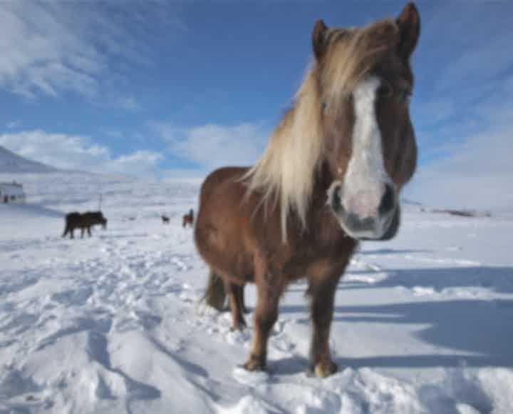 ชุมชนท่องเที่ยวไอซ์แลนด์