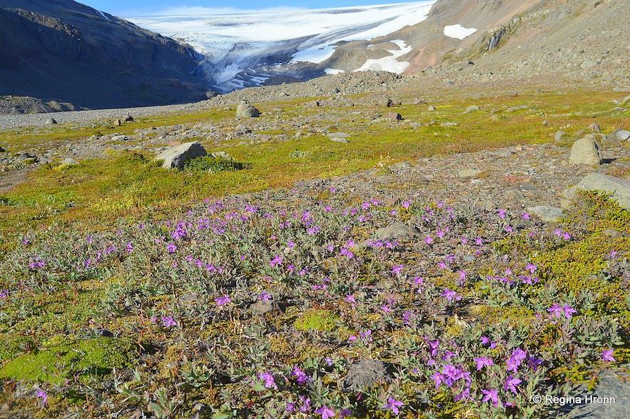 The hike to Drangajökull glacier