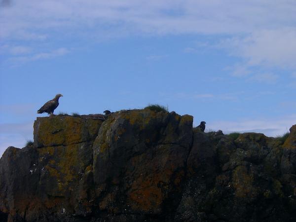 Birds gather at Snorrastaðir in west Iceland.